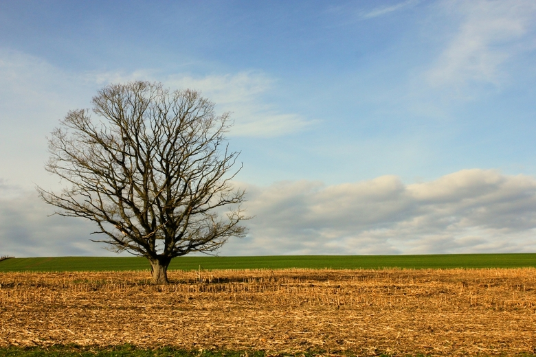 Lonely tree - Lonely tree