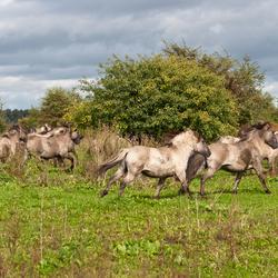 paarden (2).jpg