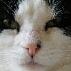 Breezer in close-up