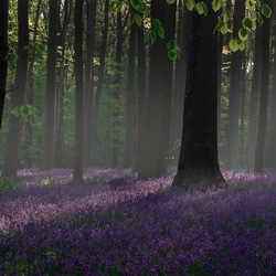 The Blue Forest...