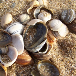 Verdronken schelp