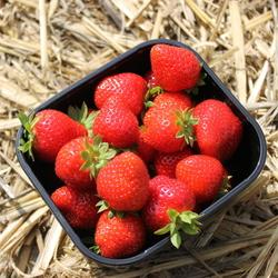 Verse aardbeien