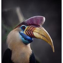 Jaarvogel