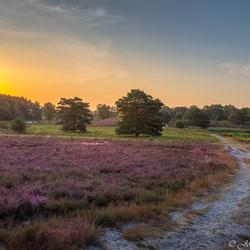 Brunssummerheide zonsopkomst