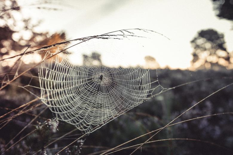 Het web - ochtend wandeling bij zonsopkomst