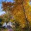 Last autumn colors