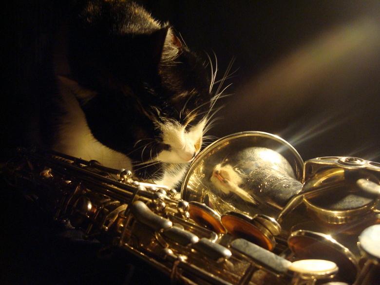 Muziekkat - Een foto uit de oude doos, 2 - 2 - 2009