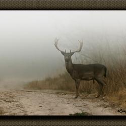 Damhert in de Mist
