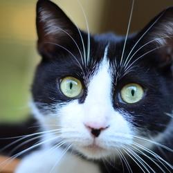 Curiosity isnt killing the cat