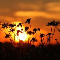 Kamille zonsondergang