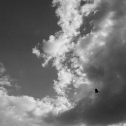 Bird & Clouds