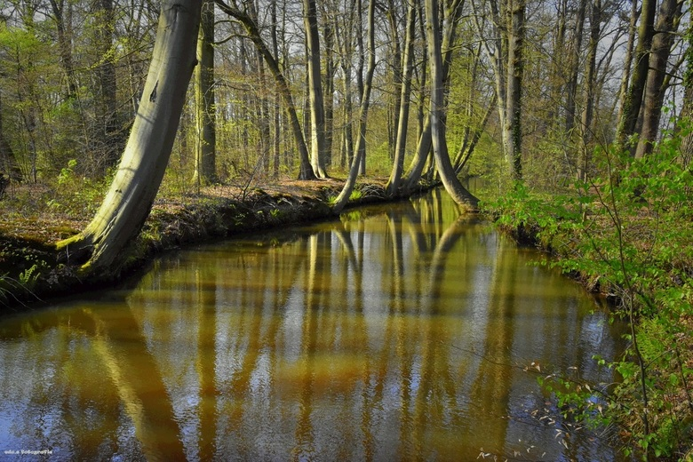 Lente in Twente.