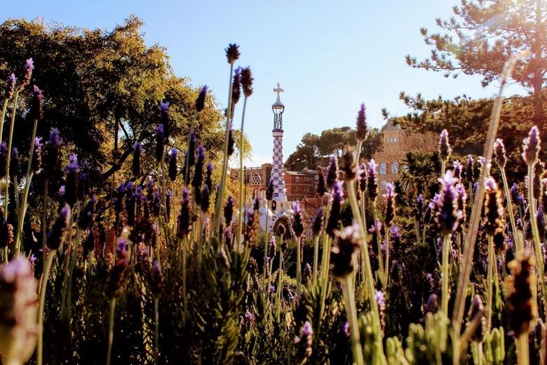 Parc Guell Lavendel - Parc Güell, Barcelona. Lavendel en torenpunt komen samen.<br /> <br /> Canon Canon EOS 1200D<br /> ƒ/11<br /> 1/125<br /> 2