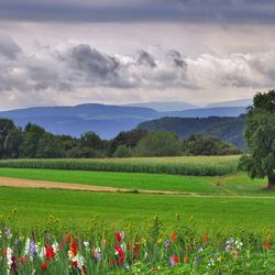 Kleurrijk Panorama