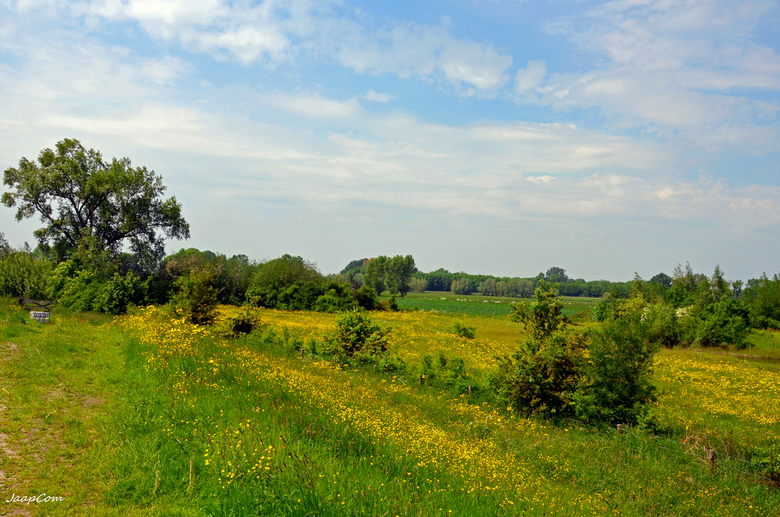 Landschap - Deze foto gemaakt op de zalkerdijk dorpje Zalk overijssel !
