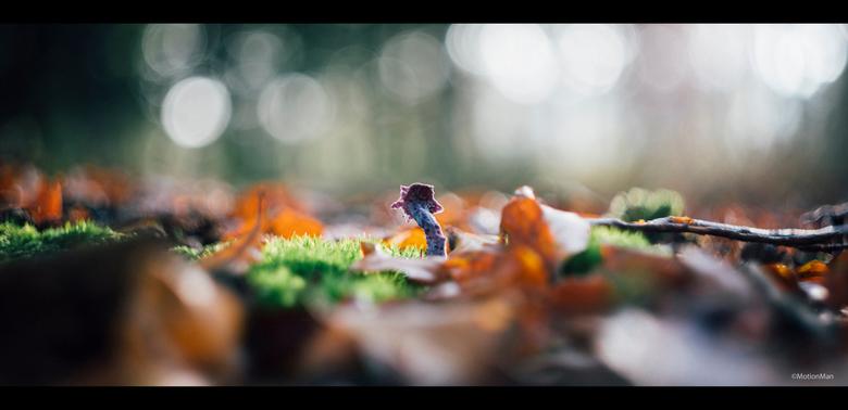 Paars - Bijzonder uitziende paarse paddenstoel.<br /> <br /> <br /> <br /> ©MotionMan 2019