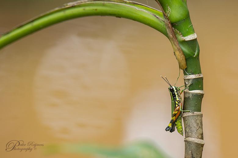 """Jumper - Een opname van afgelopen zomer in Suriname. Iedereen bedankt voor de leuke reacties en beterschapswensen bij mijn vorige upload <img  src=""""/i"""