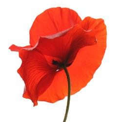 mijn favoriete bloem