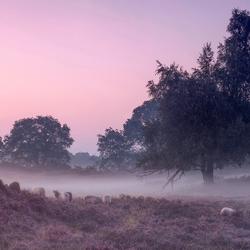 Mist..