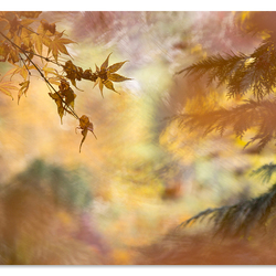 Feelings of Autumn