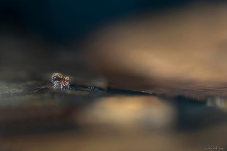 Into the void - Springstaartje uit de voortuin gehaald met de blaadjes waar hij op zat. Op de eettafel gelegd en zo gefotografeerd. <br /> Daar had i