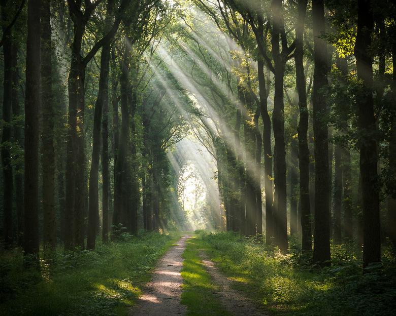 Shine the light - Het fijne aan nog vrij zijn is het vroege fotograferen! Fijne dag