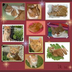 Katten-collage