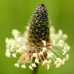 Prachtige bloem, wat is de naam?