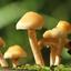 Pilzen suchen