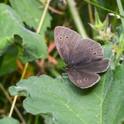 Mijn eerste vlinder