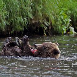 Grizzly: relaxen op zondagmiddag
