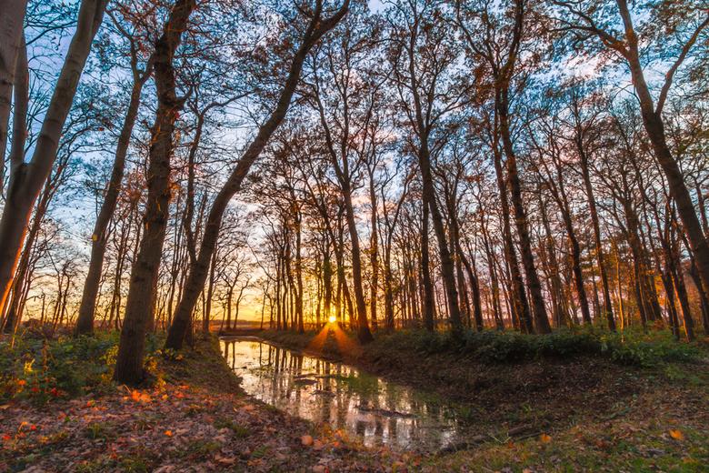 Zonsondergang - Vandaag nog even het bos in geweest met het mooie weer. HDR foto gemaakt van de zonsondergang in het bos.