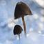 Icy Mushrooms