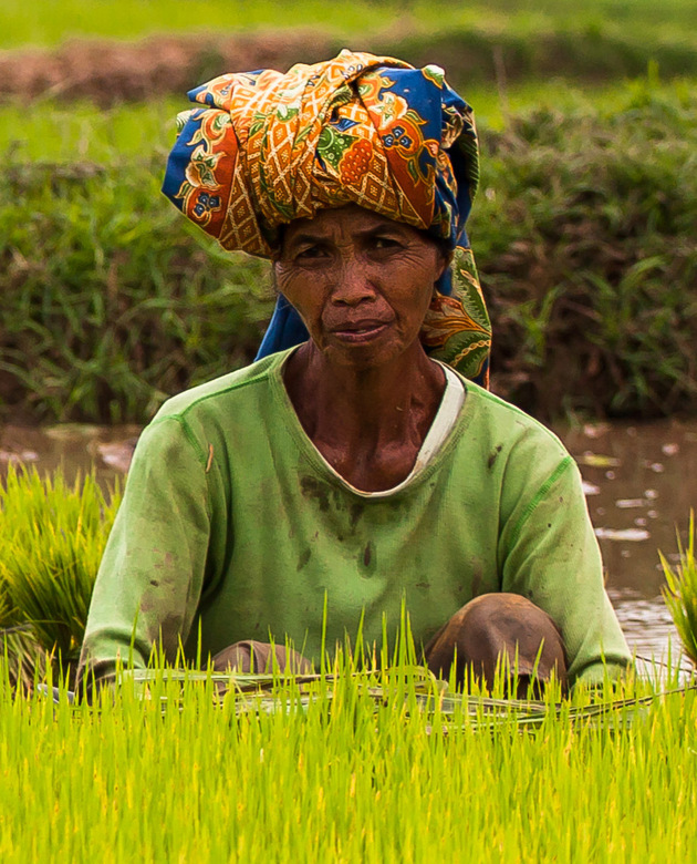 The colours of life - Kleurrijk, de huid gebruind en weerbarstig door de zon. Uren zwoegen met het uitzetten van de rijstplantjes. Denk even aan het c