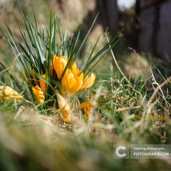 Dag winter, hallo voorjaar.