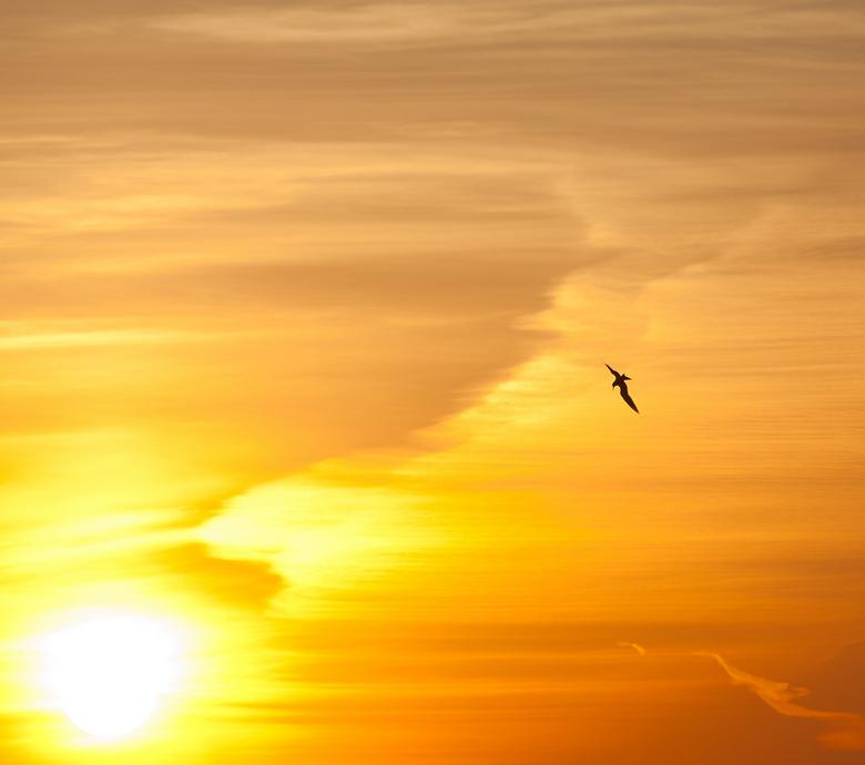 Zonsopgang - Deze meeuw zweeft heerlijk boven de loosdrechtse plassen, mooi om de natuur zien te ontwaken!