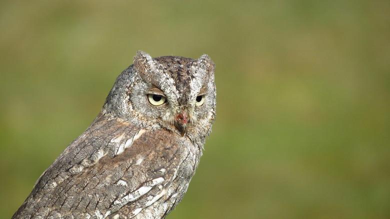 Konijn Uiltje - Vanmorgen een Roofvogelshow bezocht in Katwijk aan Zee.<br /> Voor mij een unieke mogelijkheid om in alle rust de roofvogels eens goe