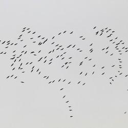Kraanvogeltrek