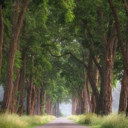 Acacia Lane