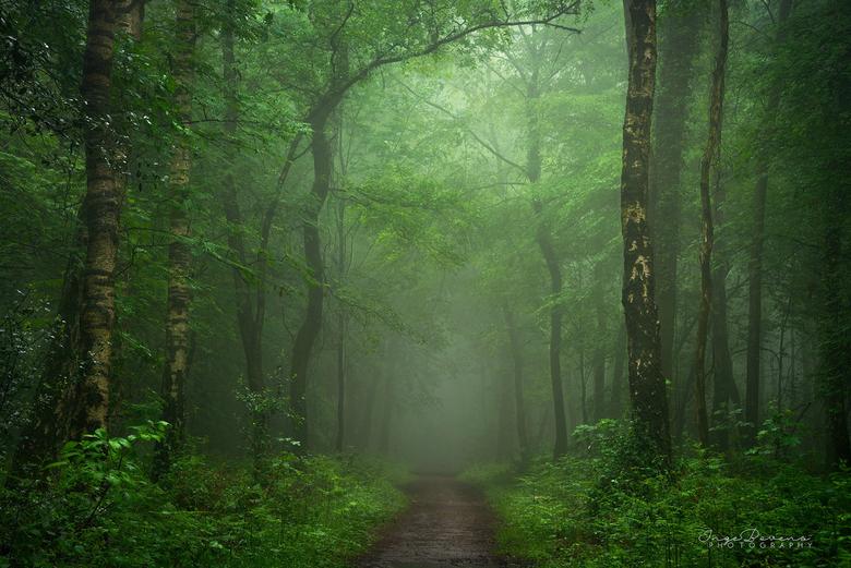 """The Mystical Side. - Donker en mysterieus: zo zie ik de bossen graag <img  src=""""/images/smileys/wilt.png""""/>"""