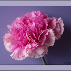 bloemig