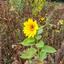 1 van de laatste bloemen #herfst