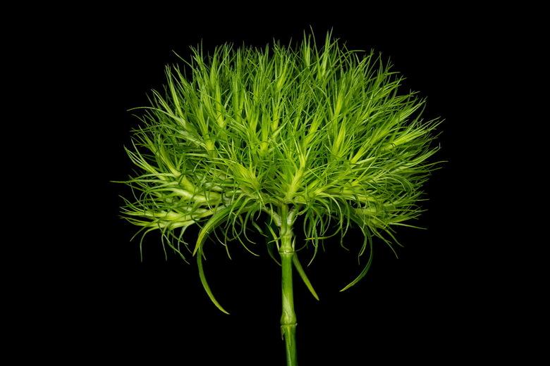 Groen -