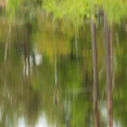 Gezichtsbedrog of een Monet