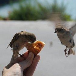 De mussen eten uit je hand