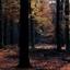 Herfst in Austerlitz 2