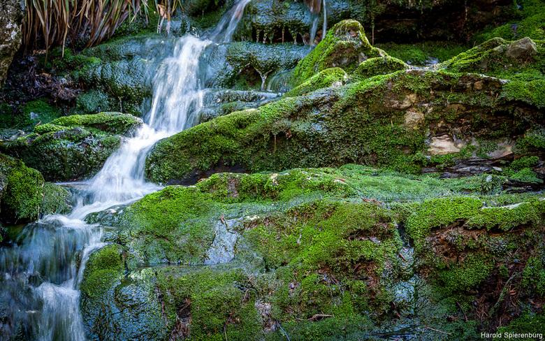 Mossy - Foto van de prachtige natuur in de Ardennen.