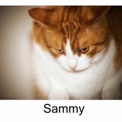 Sammy de kater