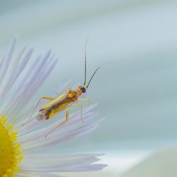 een minuscuul insektje 4967-1