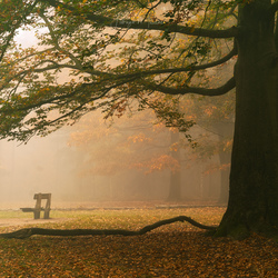 Lonely in the autumn mist